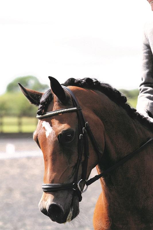 Tuition & Equestrian Facilities Tenbury Wells - Horse