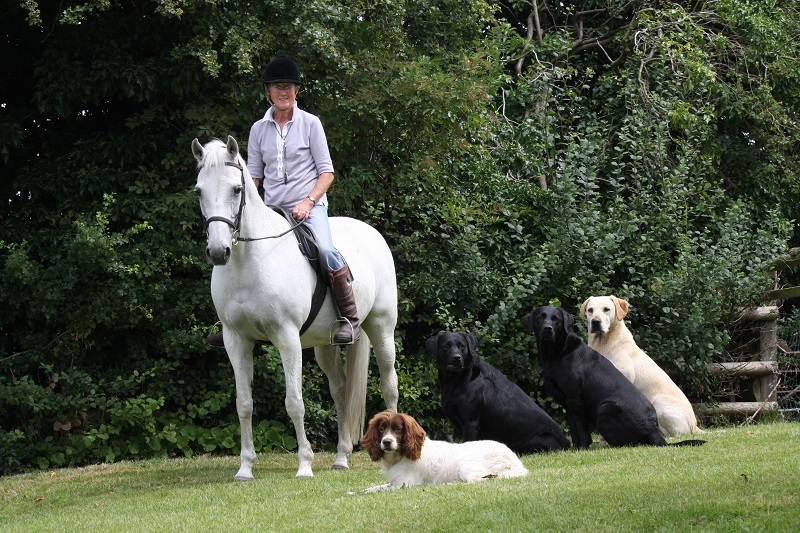 Kyre Equestrian and Lower House B&B - Horse and Dogs
